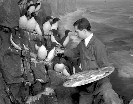 Artist Raymond deLucia works on a diorama at the American Museum of Natural History in 1939. Source: the American Museum of Natural History website